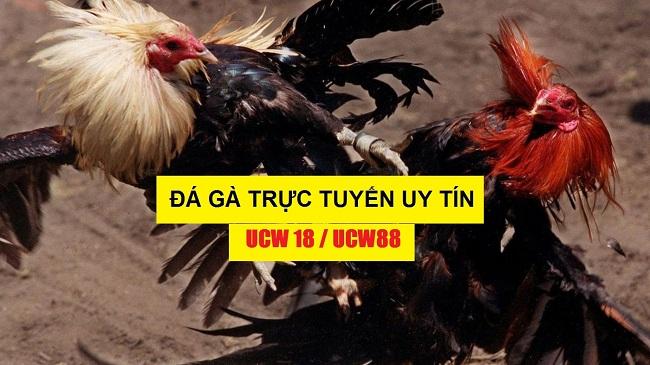 da-ga-truc-tuyen-ucw88